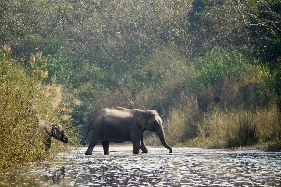 Safari in het Zuiden van Nepal