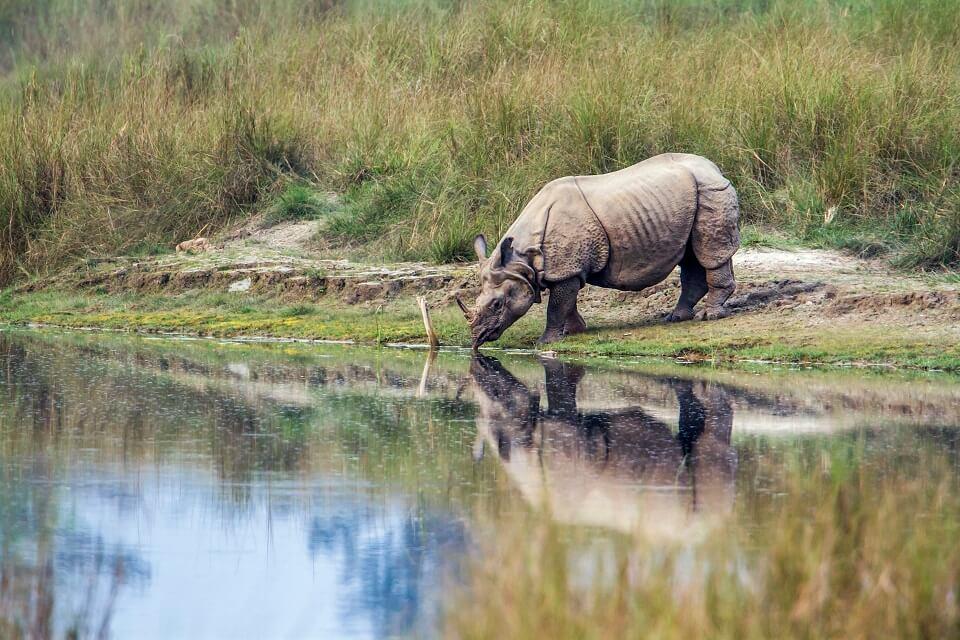 Safari in het Zuiden van Nepal – de neushoorn