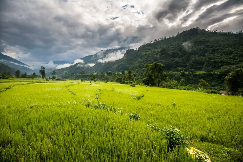 Manaslu met Tsum vallei trek – groene grasweides in de Tsum vallei